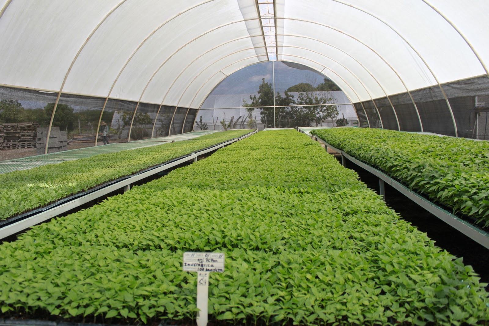 Para desarrollo del sector agropecuario se necesitan rd for Construccion de viveros e invernaderos